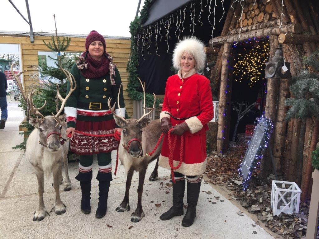 Reindeer Russells