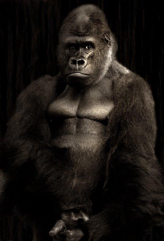 Gorilla Pose