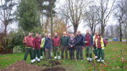 tree planting in Jubilee Gardens